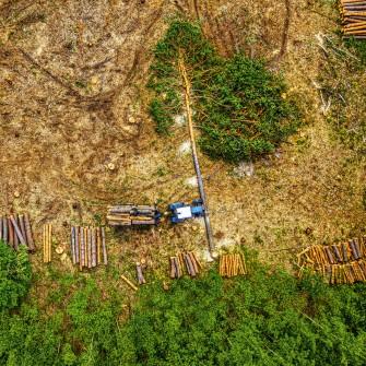 Рубают, сушат, продают. Как работает Государственное Остерское лесное хозяйство. Фоторепортаж Forbes