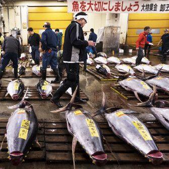 Як українська компанія переконала японців купувати в неї рибу для суші /Фото Getty Images
